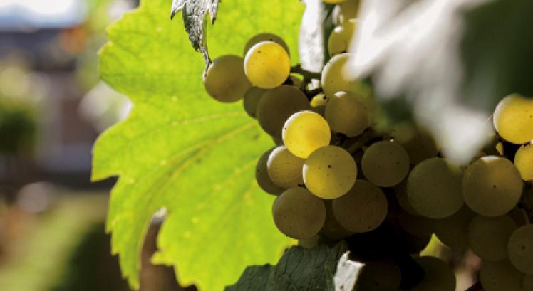copertina_winery